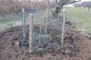 Planter un cerisier jardiner avec jean paul - Quand planter un cerisier ...