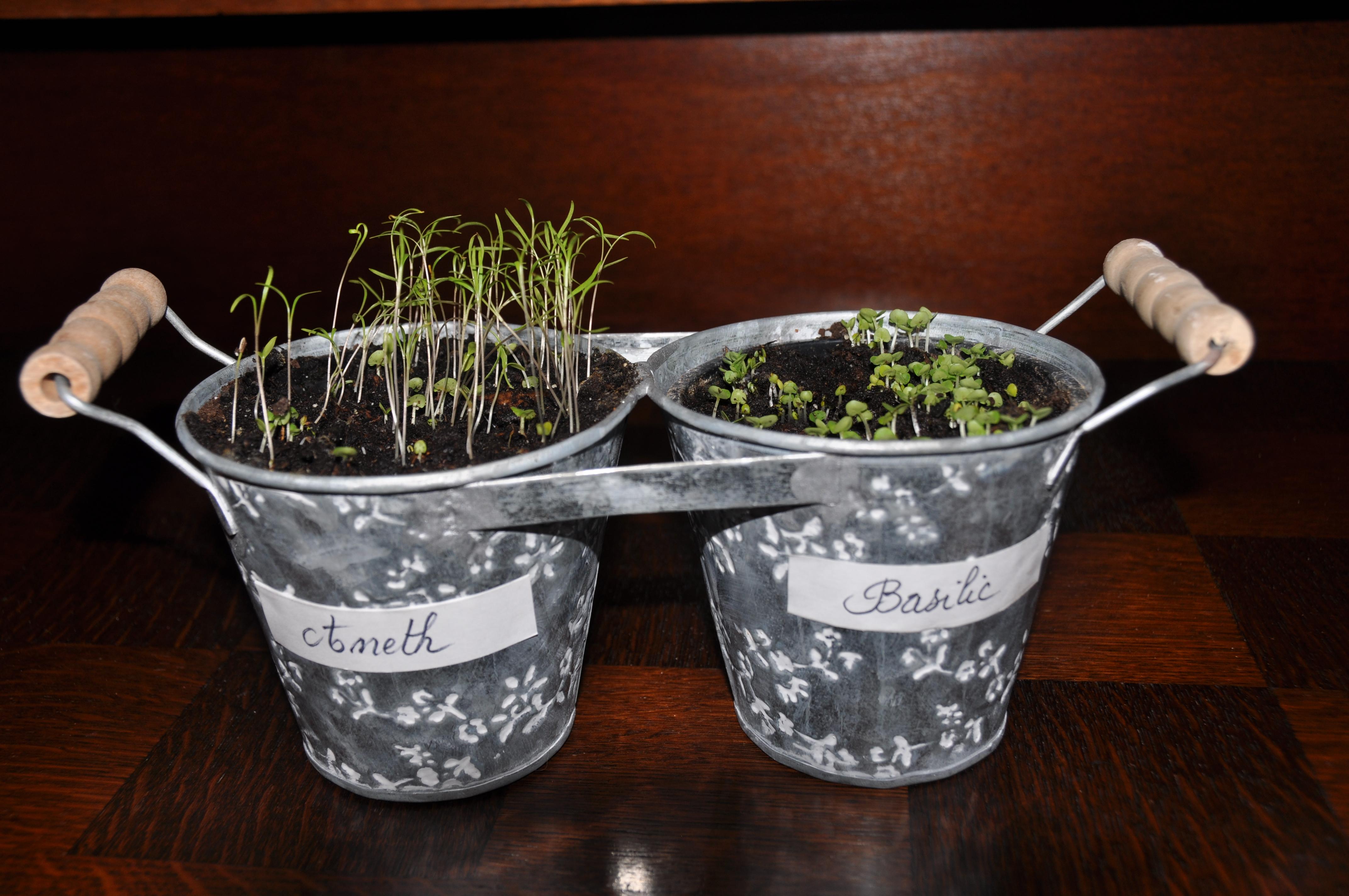 5 activit s au jardin pour janvier 2018 - Arrosage basilic en pot ...