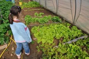 De belles salades le 6 avril 2011