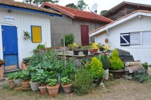 cultiver sur son balcon sur sa terrasse ou hors sol jardiner avec jean paul. Black Bedroom Furniture Sets. Home Design Ideas