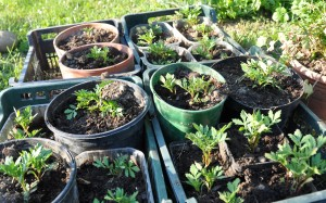 la lutte biologique bio astuces jardiner avec jean paul. Black Bedroom Furniture Sets. Home Design Ideas