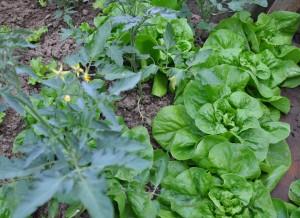 semer des salades jardiner avec jean paul. Black Bedroom Furniture Sets. Home Design Ideas