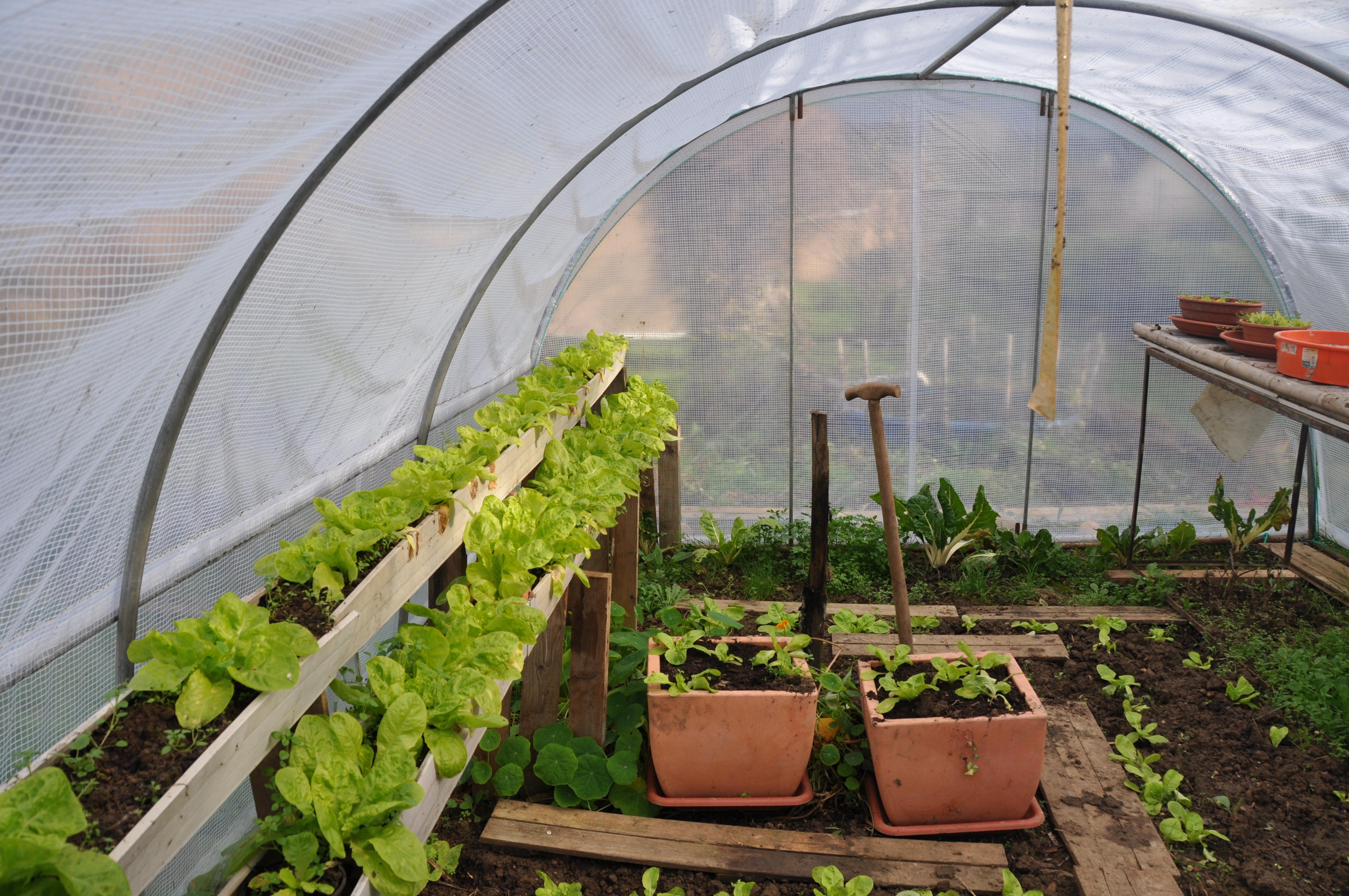 le jardin dans le sceptre d 39 ottokar jardiner avec jean paul. Black Bedroom Furniture Sets. Home Design Ideas