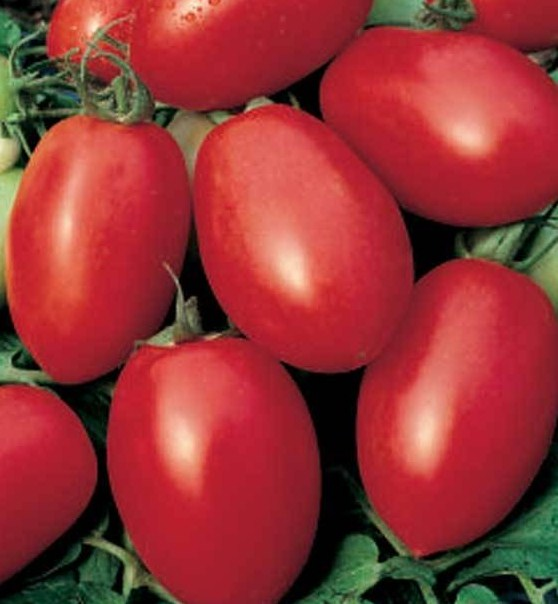 Tomate olivette