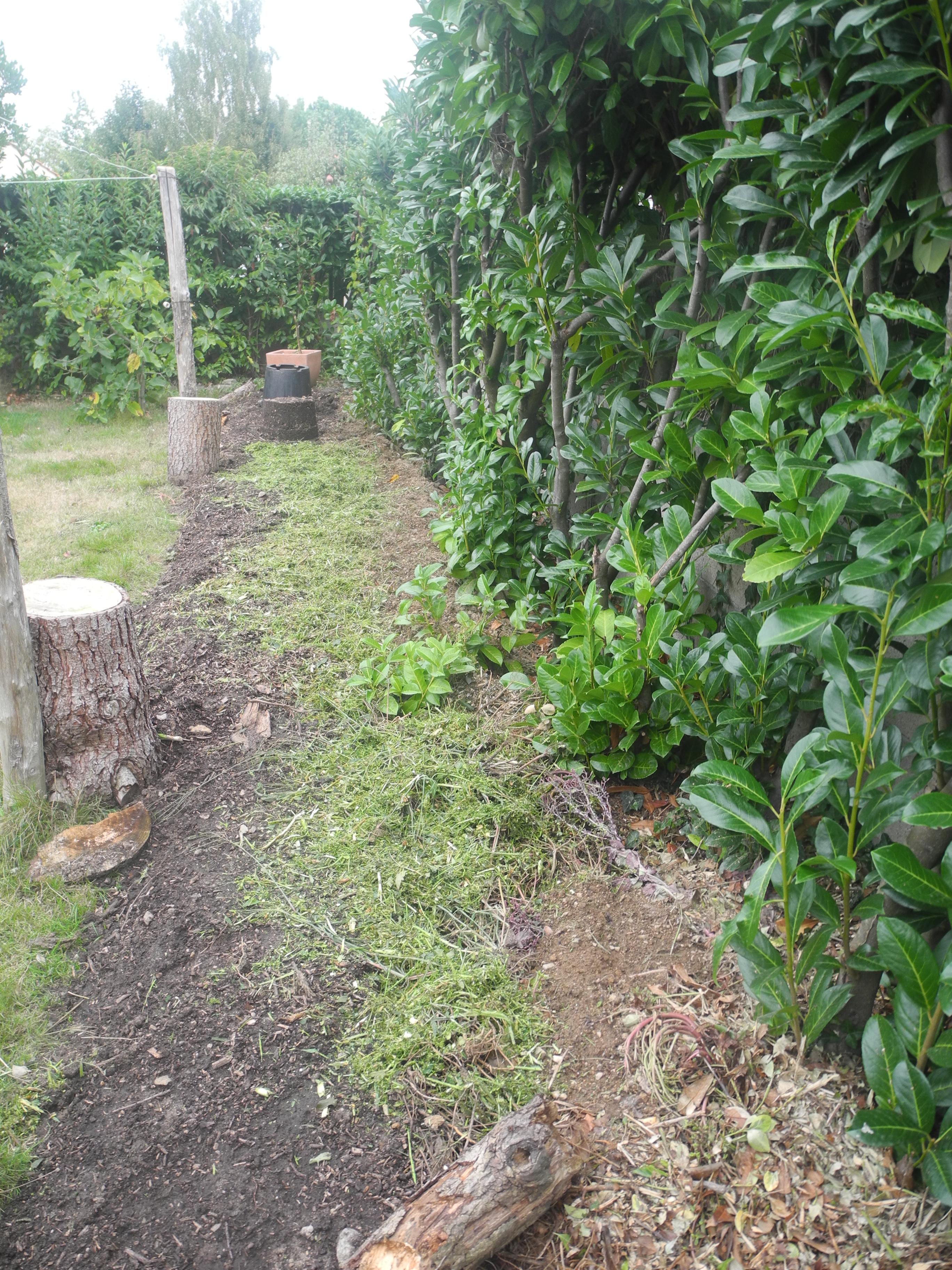 planter des fraisiers jardiner avec jean paul. Black Bedroom Furniture Sets. Home Design Ideas