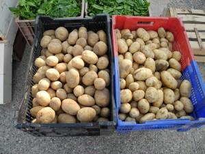 De belles pommes de terre
