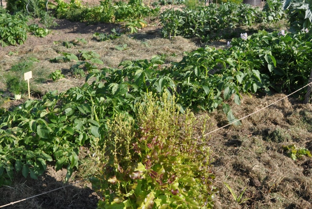 Jardins familiaux (1a)