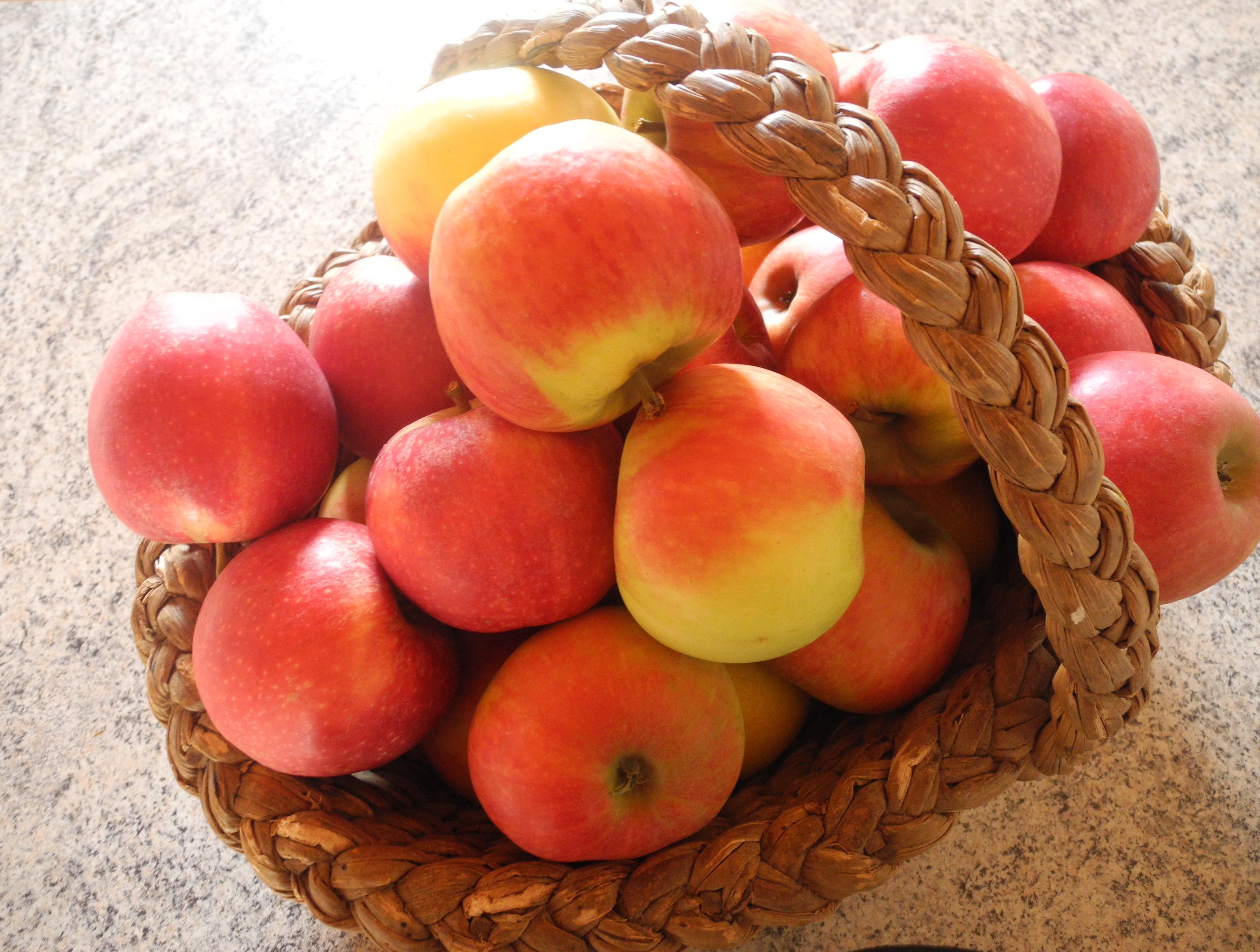 manger des pommes jardiner avec jean paul. Black Bedroom Furniture Sets. Home Design Ideas