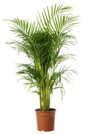 L 39 ar ca jardiner avec jean paul - Bambus zimmerpflanze pflege ...