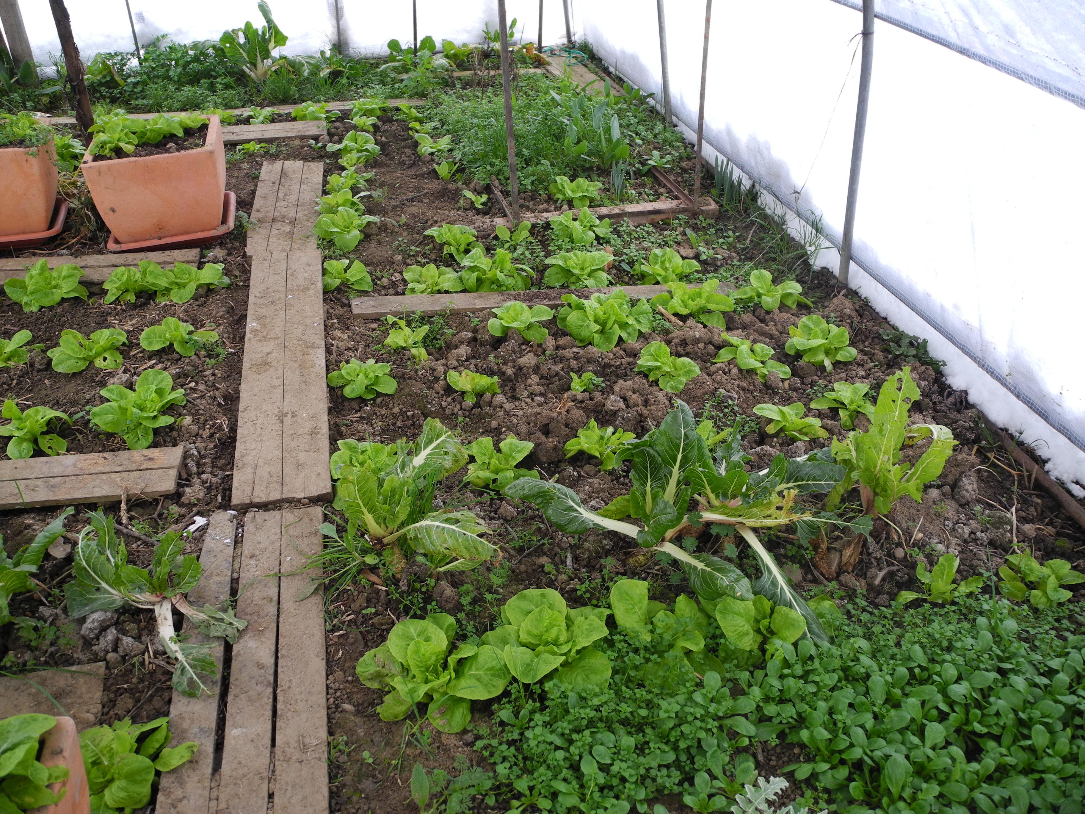 Que faire au jardin en f vrier jardiner avec jean paul for Jardin entretien jean paul traineau