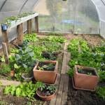 Légumes sous serre