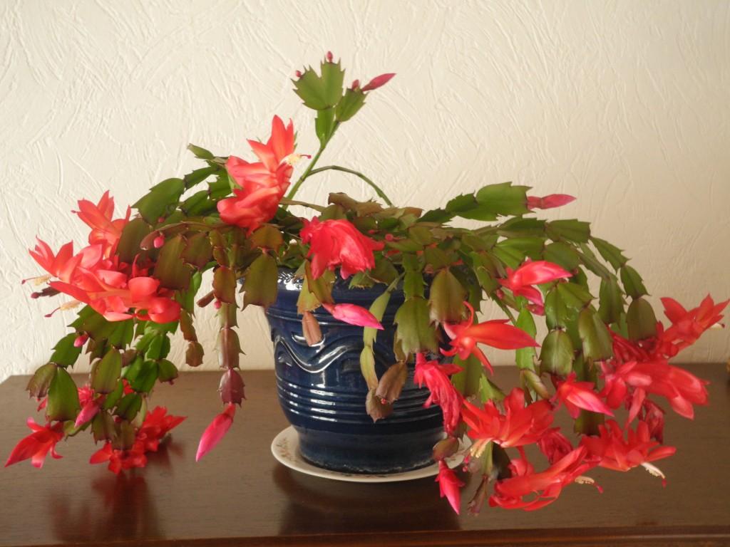 plante verte qui fleurit rouge
