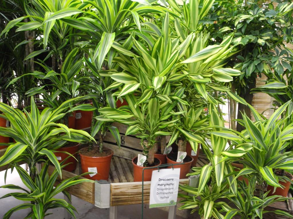 Plantes d'intérieur en hiver Jardiner avec Jean Paul #8EAB20