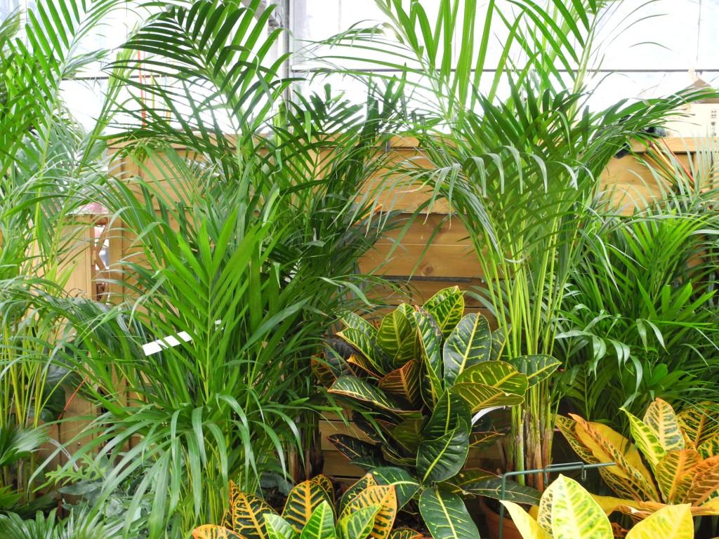 Plantes d'intérieur en hiver Jardiner avec Jean Paul #AA9E21