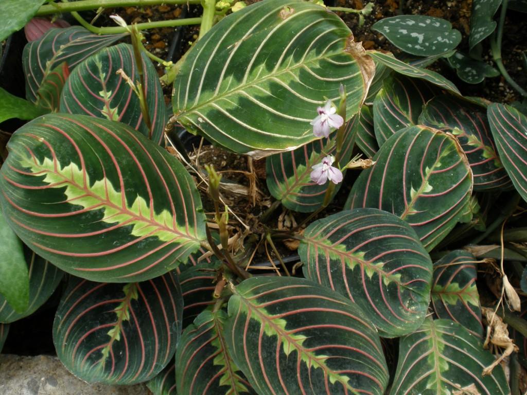 Plantes d'intérieur en hiver Jardiner avec Jean Paul #7A913A