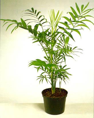plantes d 39 int rieur en hiver jardiner avec jean paul. Black Bedroom Furniture Sets. Home Design Ideas