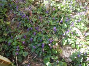 Que faire au jardin en ce mois de mars 2014 jardiner - Que faire au jardin en mars ...