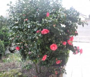 Que Faire Au Jardin En Ce Mois De Mars 2014 Jardiner Avec Jean Paul