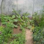 Plantes en serre