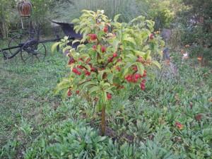 Que faire au jardin en ce mois d 39 octobre 2014 jardiner for Jardin entretien jean paul traineau