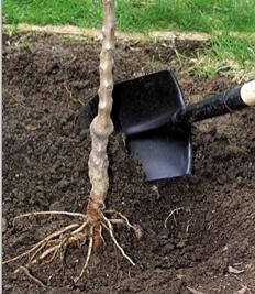 planter un arbre jardiner avec jean paul. Black Bedroom Furniture Sets. Home Design Ideas
