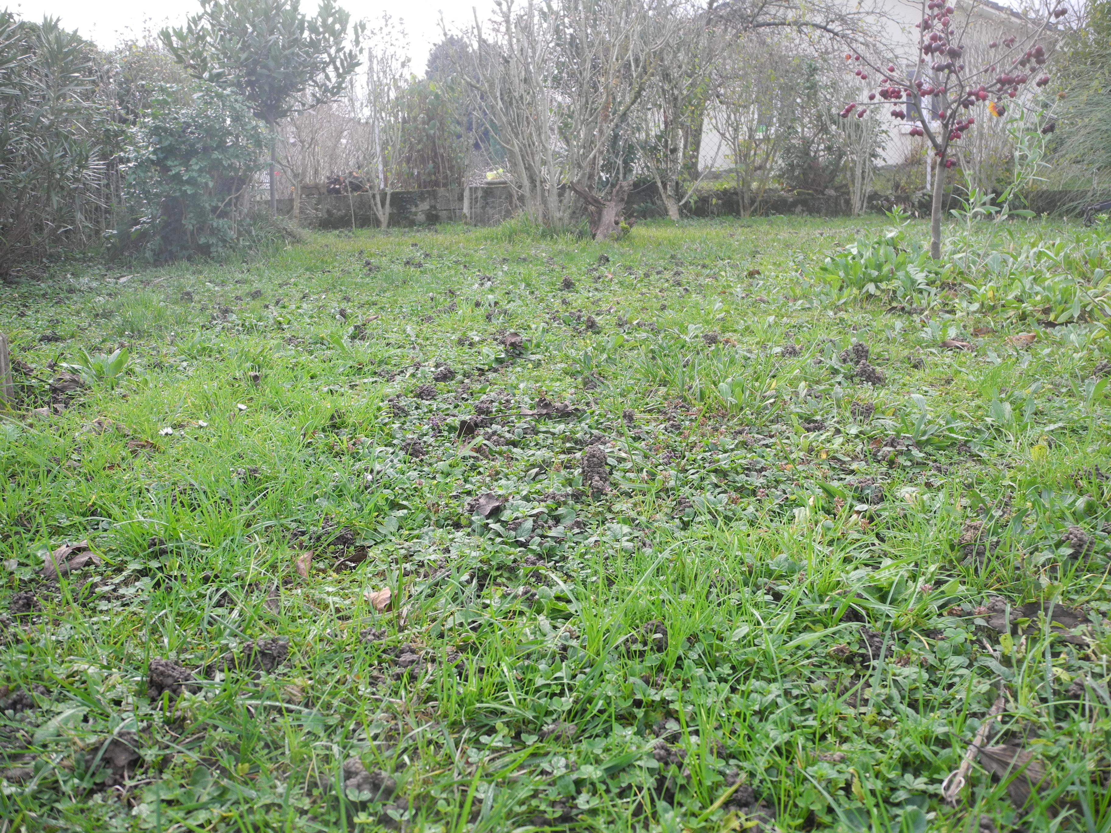7 activit s pour le jardinier en ce mois d 39 avril 2016 jardiner avec jean paul - Retourner la terre pour pelouse ...