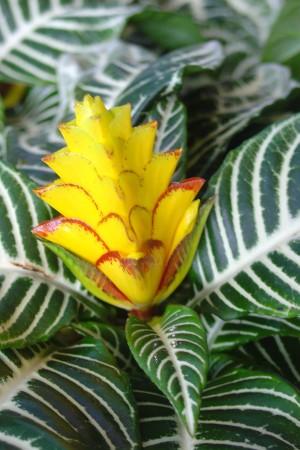 plante z bre jardiner avec jean paul