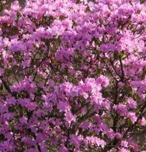 Que faire au jardin en ce mois de f vrier 2015 jardiner avec jean paul - Que faire au jardin en fevrier ...