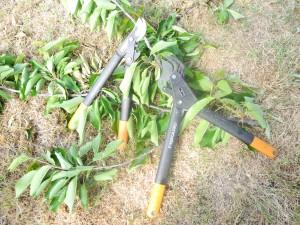 Taille des arbustes jardiner avec jean paul - Taille des arbustes ...