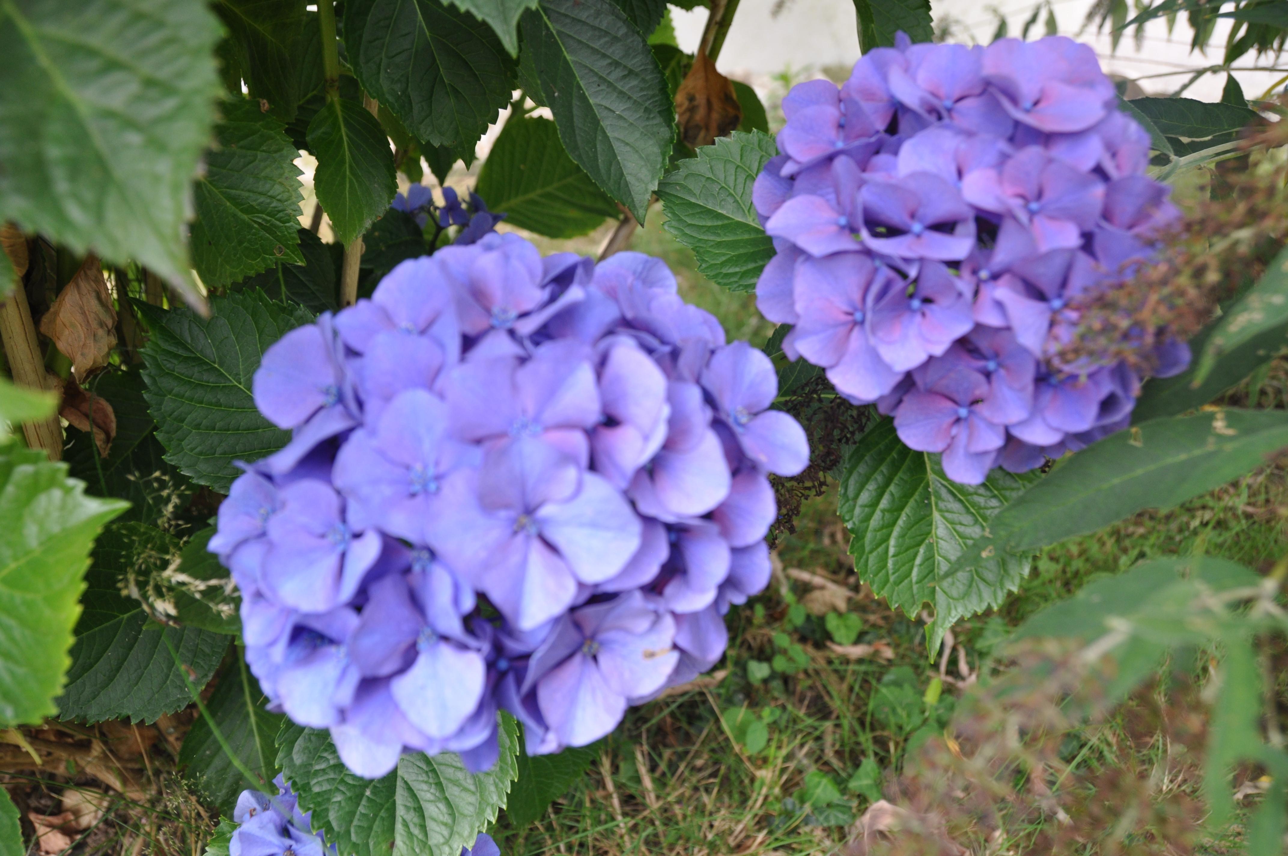 calendrier de la floraison des arbustes - jardiner avec jean-paul