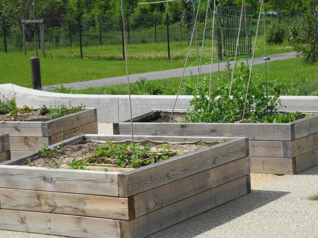 sept activit s pour le jardinier en ce mois de janvier. Black Bedroom Furniture Sets. Home Design Ideas