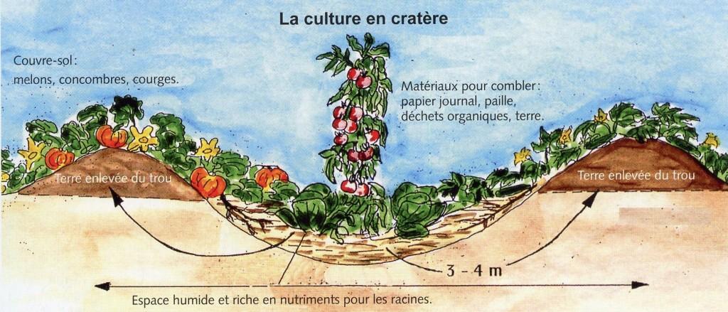 Culture en cratère