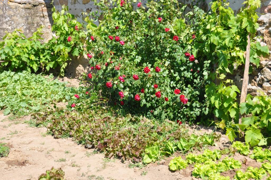 Jardin protégé