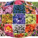 Terre fleurie