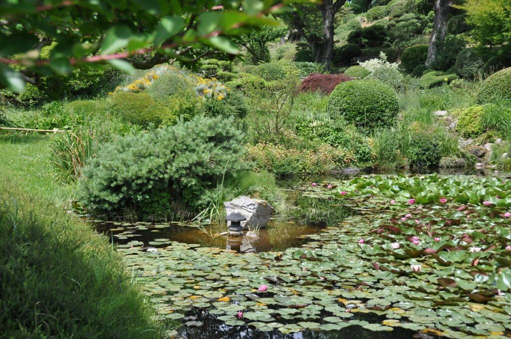 5 activit s au jardin pour ce mois de f vrier 2017 for Plante et jardins