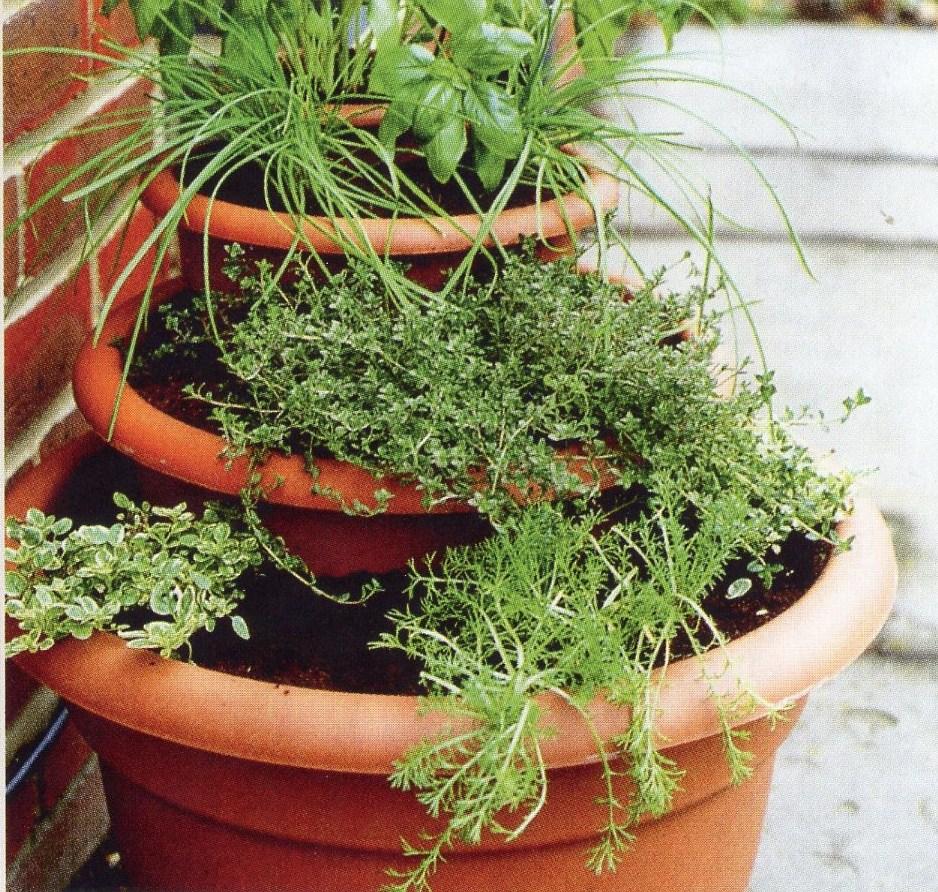 Une v randa un bon refuge pour vos plantes - Planter persil en pot ...