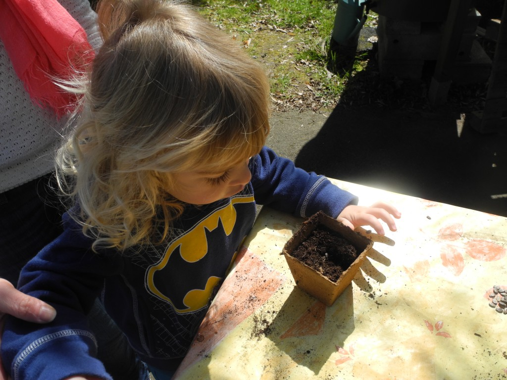 Semis de pastèques