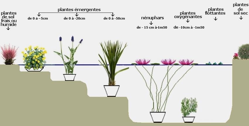 Plantes pour bassin