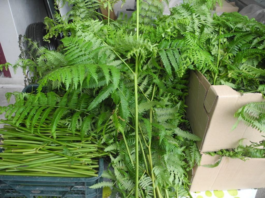 Foug re un cv bien charg en comp tences jardiner avec for Purin de fougeres taupin
