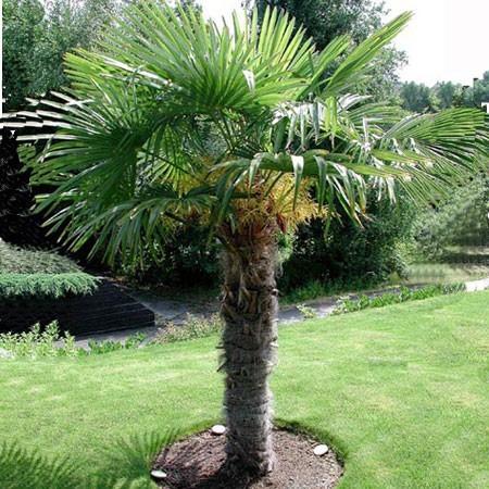 Jardiner avec la lune en juin 2016 jardiner avec jean paul for Plante palmier