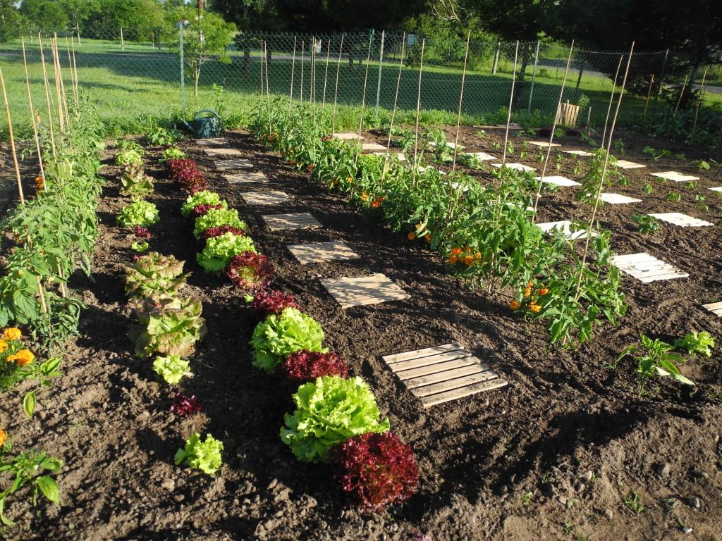 la permaculture jardiner avec jean paul