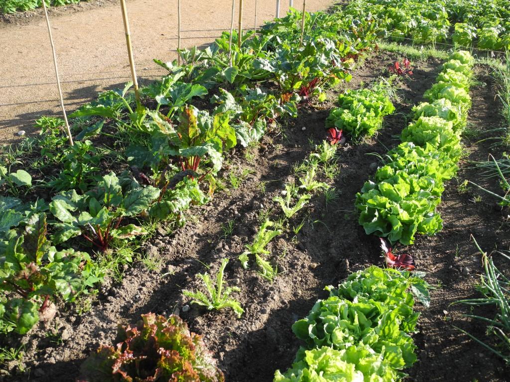 Les jardins familiaux de challans cr ation et premi res for Jardin entretien jean paul traineau