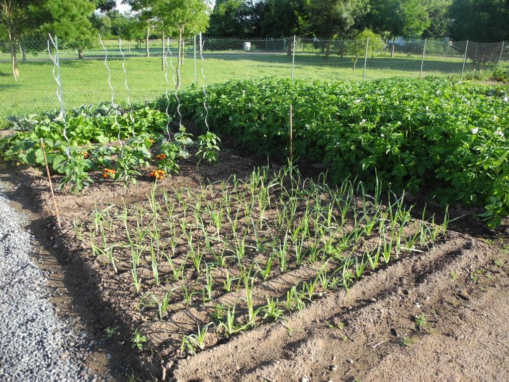Les jardins familiaux de challans cr ation et premi res for Les jardins de