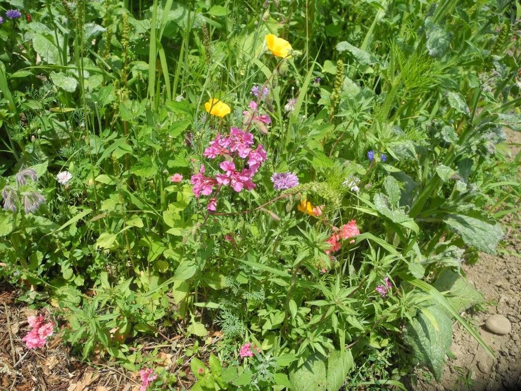 Plaidoyer pour les mauvaises herbes Jardin entretien jean paul traineau