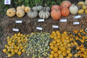 courges-exposition-1
