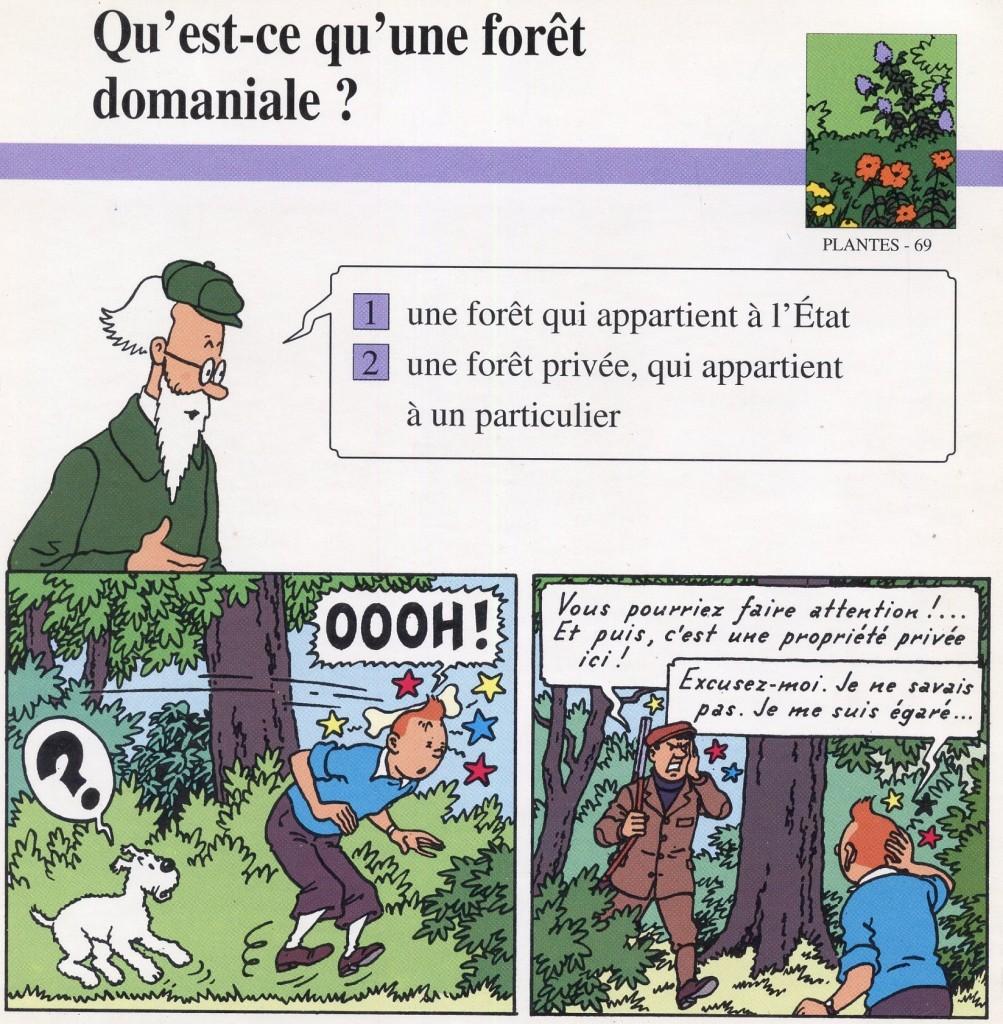 La végétation de la forêt domaniale