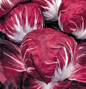 Chicorée rouge
