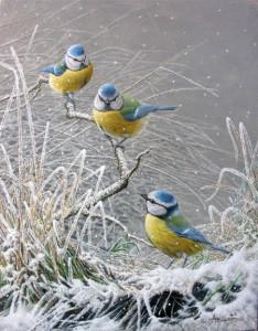3 mésanges bleues