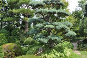 Jardin zen (1)