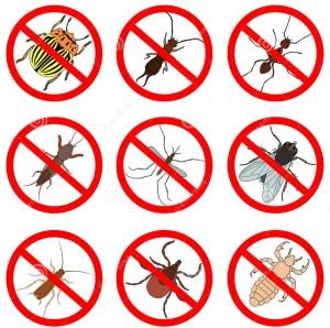 Lutte contre insectes